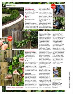 The art of a formal garden - hedging and espalier: Introduce a sense of style to your landscape with these wonderful, timeless ideas, then learn how to plant a hedge like a professional and master the ancient art of training trees - clipped from page 94 of Better Homes and Gardens, Apr 2014 issue by the Netpage app.