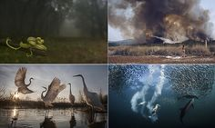 National Geographic photography contest shows nature at most beautiful #DailyMail | These are some of the stories. See the rest @ http://www.twodaysnewstand.com/mail-onlinecom.html or Video's @ http://www.dailymail.co.uk/video/index.html And @ https://plus.google.com/collection/wz4UXB