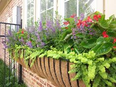 Zone 7-8- has plant names for each pic.  Signature Gardens: CONTAINERS/ANNUALS - Spring/Summer