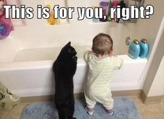 Funny Cat Pictures with Captions 36                                                                                                                                                                                 More