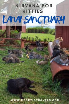 For an introverted cat lover, it does not get any better than the Lanai Cat Sanctuary in Hawaii. Visit Hawaii, Visitors Bureau, Hawaiian Islands, Lanai, Nirvana, Small Groups, Day Trips, Trip Advisor, Cat Lovers