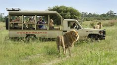 The Authentic Safari | Bench Africa