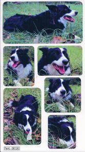 Dogs - Border Collie Vinyl Stickers