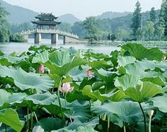 Hangzhou, China, 2005.  They have the best tea houses here.