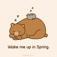 pusheen hibernating with a bear... lol!