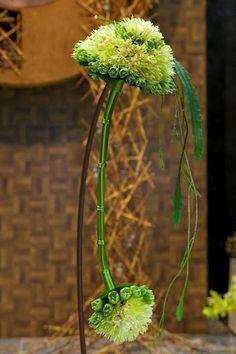 Unusual double headed green glamelia by Neil Whittaker.