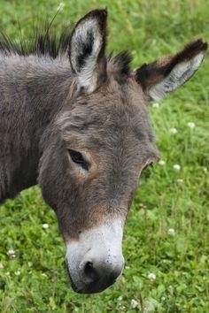 Hey Ya Donkey by rdw283.deviantart.com on @deviantART