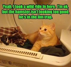 Never let it be said that cats don't know how to have fun.