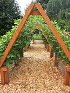 Corrugated raised beds with A frame supports for climbers
