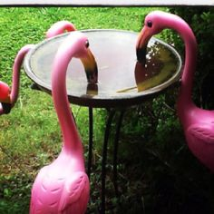 Even plastic flamingos have to drink