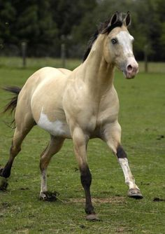 look at the pretty horse!