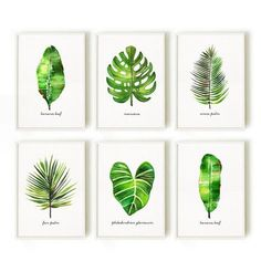 Palm leaf watercolor painting Botanical chart Tropical by colorZen