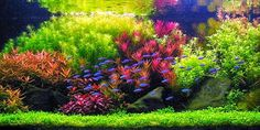 dutch aquascape styles                                                       …