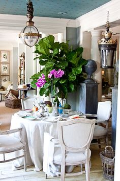 We love fiddle fig trees.  They give rooms a great splash of life and add an architectural element. Many of our favorite designers use them...