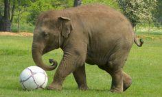 elephant photo | Elephants Huge and Massive Elephant