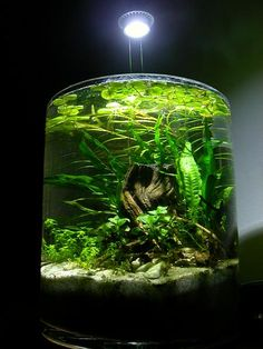 Want: nano tank