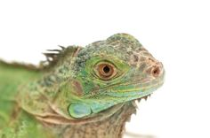 Why Does My Reptile Need a UVB Light?