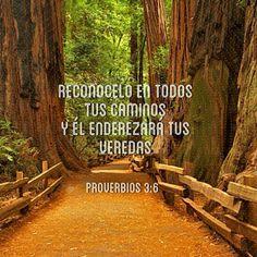 Reconôcelo en todos tus caminos y Èl enderezará tus veredas  Proverbios 3:6