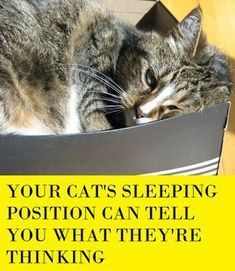 70 ideas cats sleeping positions pets for 2019 Crazy Cat Lady, Crazy Cats, Cat Info, Cat Hacks, Cat Care Tips, Pet Care, Cat Behavior, Cat Boarding, Cat Sleeping