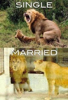 I'd be Lion if I said this wasn't somewhat the truth...
