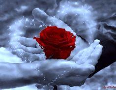 Post  #: O melhor carinho, é feito com o toque da gentileza...