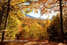 Resources for planning fall foliage trips Pt2 - New England fall foliage