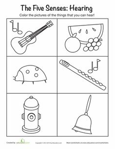 Worksheets: Sense of Hearing
