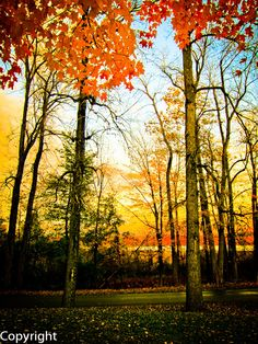 Autumn Fall Sunset Landscape Photo Print Fine Art Photography Trees Leaves Scenic Home Decor Wall Art.  via Etsy.