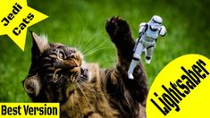 Star Wars Episode 9 Trailer Cats Funny Cat Videos, Funny Cats, Kathleen Kennedy, Billy Dee Williams, Lando Calrissian, All We Know, Star Wars Film, Mark Hamill, Cat Behavior