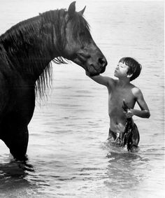 O Corcel Negro - The Black Stallion All The Pretty Horses, Beautiful Horses, Horse Movies, Horse Story, Black Stallion, Beautiful Creatures, Equestrian, Cute Animals, Black Animals
