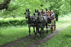 Countryside and Wine Tasting 1 Day Tour - Studniska Horse Centrum