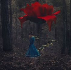 Paint them Red - rose, conceptual, flower, forest