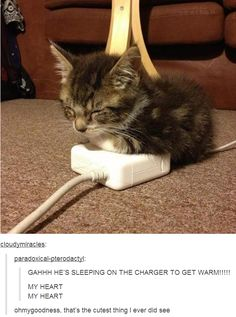 kitten gets warm on laptop charger