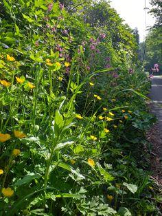 Welsh, Wildflowers, Herbs, Plants, Welsh Language, Wild Flowers, Herb, Planters, Wales