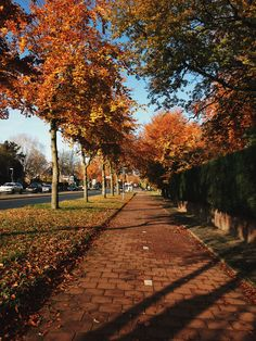 Autumn Cozy, Autumn Trees, Autumn Leaves, Autumn Fall, Autumn Aesthetic, Fall Pictures, Hello Autumn, Fall Season, Fall Halloween