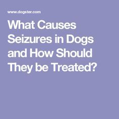 What Causes Seizures in Dogs and How Should They be Treated?