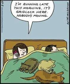 #WednesdayWags #GoldenRetriever #AdoptDontShop #Humour Cartoon Jokes, Cartoon Dog, Cat Cartoons, Cat Comics, Running Late, Smiles And Laughs, Calvin And Hobbes, Twisted Humor, Life Is An Adventure