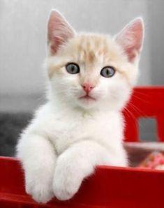Kitten | Flickr <>Feel free to share on Pinterest\ #catsandme