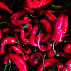 Chilis at the Farmers Market