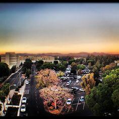 46 Best CSUF Campus images
