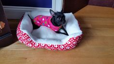 Update: Shy  Hyloh chillin' in her new bed after a day of romping with her older brother Ralphie.