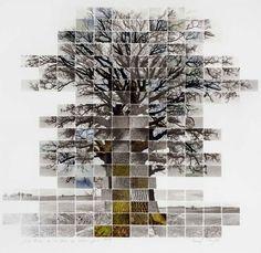 Great tree.  repin via Joyce Pugh