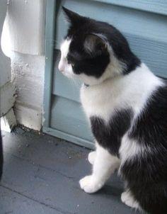 Super cute heart cat...