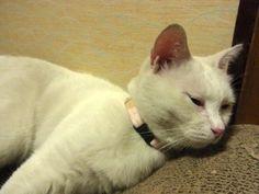 里親さんブログシャワーでも浴びようかな? - http://iyaiya.jp/cat/archives/80764