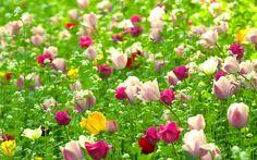 10 Images de fleurs - 2 - Frawsy