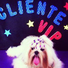 Pet Salon Lolinha já é Cliente VIP Pet Salon ... Venha ser também!! Em Rua Lafaiete n°1579 - Ribeirão Preto, SP @pet_salon @marinacasemiro  #ribs #ribeiraopreto #saopaulo #orlandia #oscarfreiresp #sertaozinho #cravinhos #petshop #serrana #shoppingiguatemi #love #limeira #pirassununga #saosimao #bonfimpaulista #veterinaria #clinicas #doglovers #dogs #dogsofinstagram #cats #photooftheday #brodowski #jardinopolis #altinopolis #morroagudo