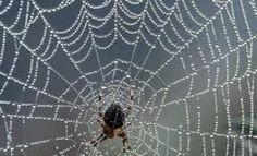 İnsanın Taklit Edemediği Bir Üretim: Örümcek İpi