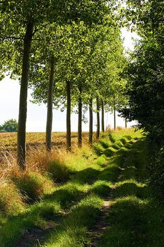 A little country lane lined by trees travels the edge of a field. Belgium. Photo by  julsatmidnight on Flickr.