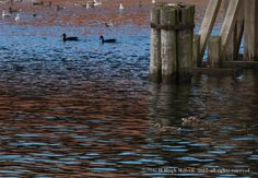 """Feather"" Series | H Hugh Miller #photography #birds Feather Photography, Bird Types, Birds, Fine Art, World, Painting, Painting Art, Bird, Paintings"