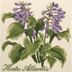 New Elizabeth Bradley Needlepoint Kit -  Hosta Atlantis from The Shade Garden